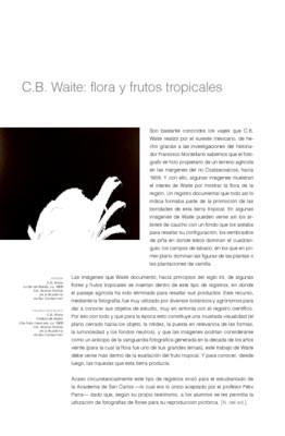 C.B. Waite: flora y frutos tropicales