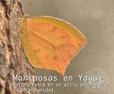 Mariposas en Yagul: metamorfosis en un sitio patrimonio de la humanidad