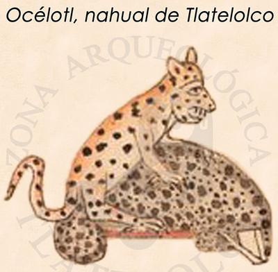 Océlotl, nahua de Tlatelolco