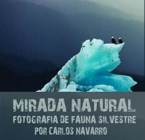 Mirada natural. Fotografía de fauna silvestre por Carlos Navarro
