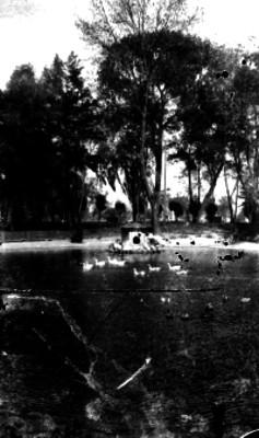 Patos en el lago de Chapultepec