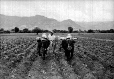 Campesino arando el campo con una yunta de bueyes