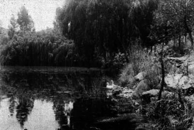 Lago, panorámica