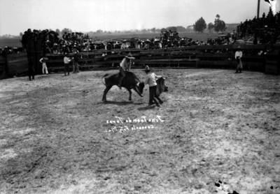 Charro jinetea toro en el Lienzo