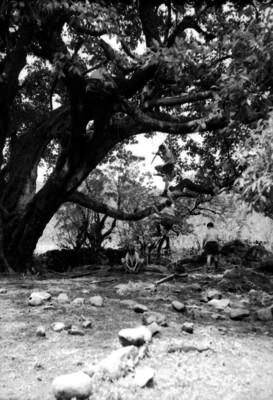 Excursionistas suben a un árbol de lazo