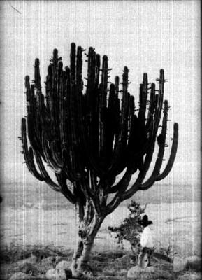 Campesino junto a un cactus