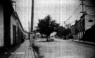 Avenida con árboles, vista parcial