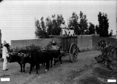 Carreta jalada por bueyes sobre un camino