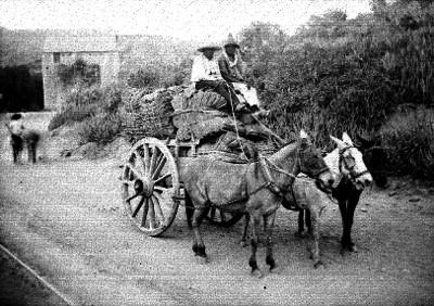 """Hombres conducen carreta en un camino de """"Guanajuato"""""""