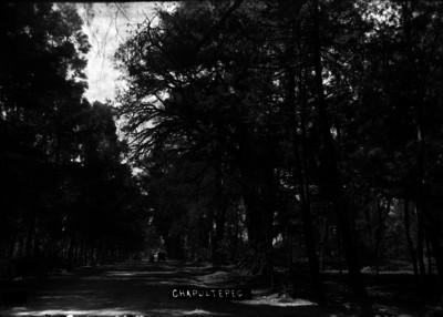 Gente pasea por camino en medio del Bosque de Chapultepec