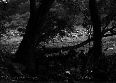 """Viajera y guías en Colima, """"191. Colima extencion trail"""""""