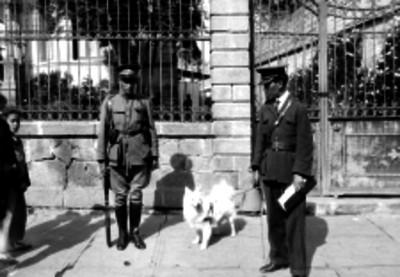Policía y perro junto a la entrada de una casa