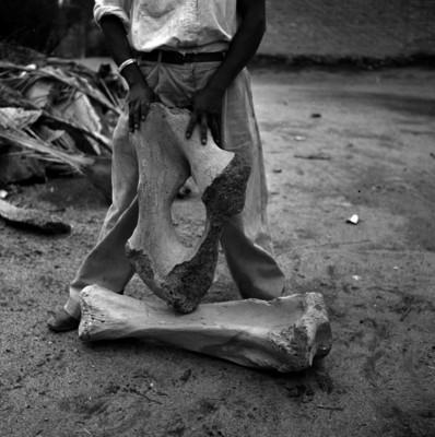 Paleontólogo sosteniendo partes de osamentas de Mamut en el piso