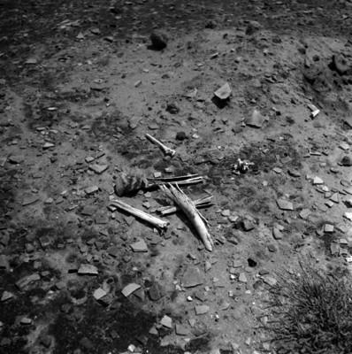 Restos de alfarería prehispánica en la superficie de una zona arqueológica