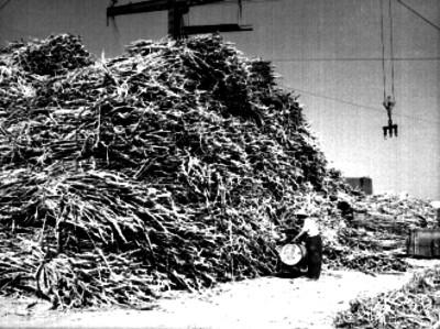 Trabajador cargando un tinaco frente a un montón de caña de azúcar en un ingenio azucarero del estado de Jalisco