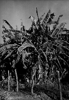 Campo de cultivo, panorámica
