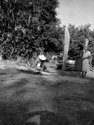 Campesino colocando cacao en mantas para orearlo