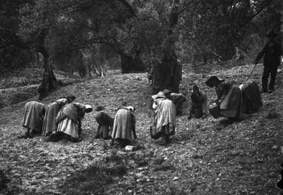 Mujeres levantan cosecha