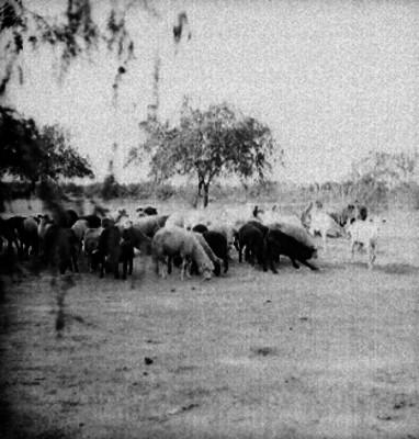 Borregos pastando en un campo