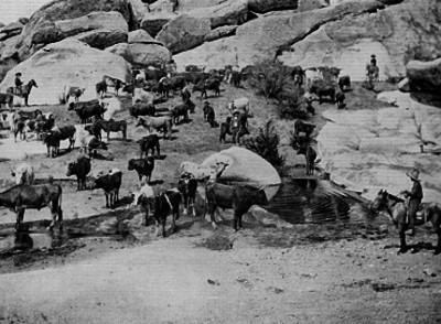 Arrieros a caballo cuidando una manada de vacas en una zona rocosa con río pequeño