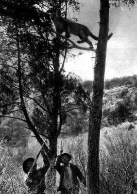 Hombres en un bosque durante la caza de un felino