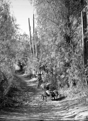 Pastor con un rebaño de ovejas en un camino rural