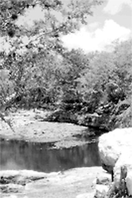 Cenote Xlacah, vista parcial
