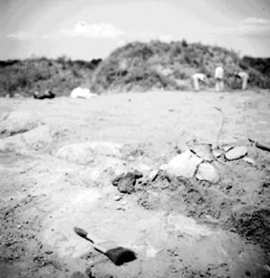 Hombres realizan trabajos de exploración y excavación arqueológica