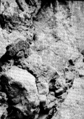 Detalle de una peña con pintura rupestre