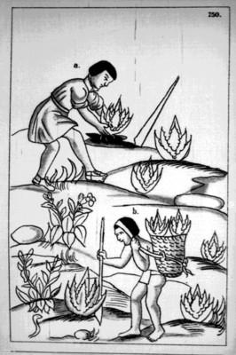 Lámina 150 del Códice Florentino