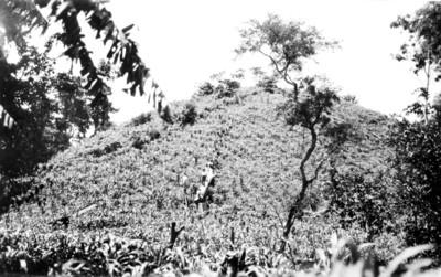 Montículo utilizado como campo de cultivo, vista parcial