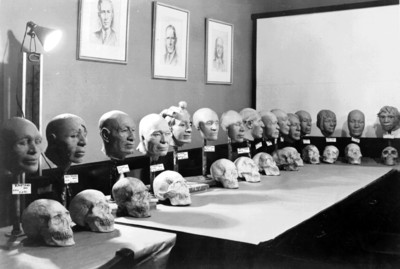 Muestra de cráneos humanos reconstruidos, reprografía