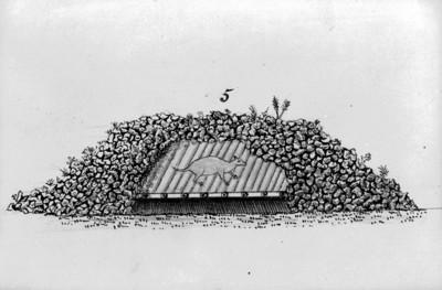 Dibujo de la casa de un tlacuache bajo las piedras