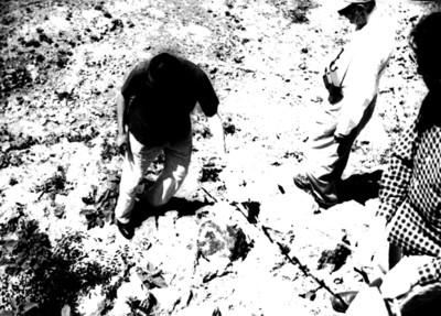 Hombres durante las excavaciones de Edzná