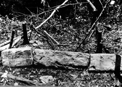 Estela en tres fragmentos, durante los trabajos de excavación en Yaxchilan, reprografía