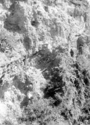 Panorámica de una tumba localizada en una barranca