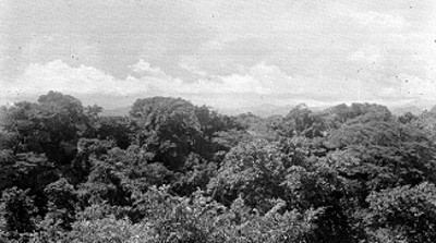 Zona boscosa, paisaje