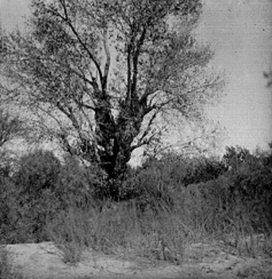 Árbol y vegetación, paisaje