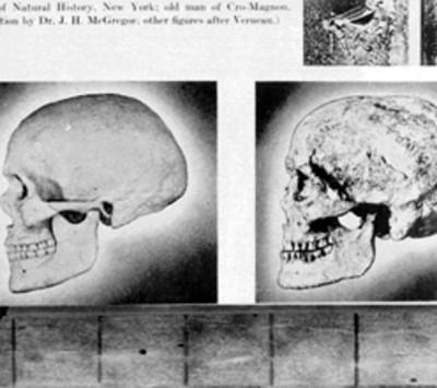Cráneo del hombre de Cromañón