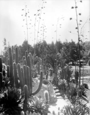 Jardín botánico de Chapultepec, vista parcial