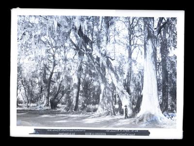 """Bosque de Chapultepec"", paisaje"