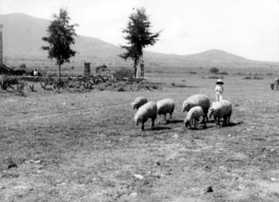 Pastor arrea ovejas en un pastizal