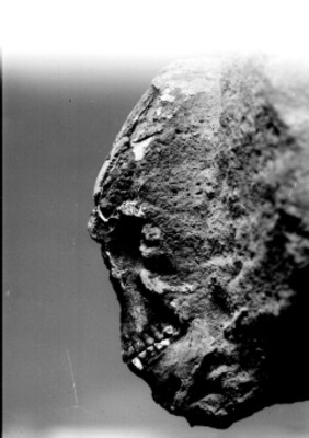 Cráneo fósil