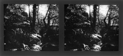 Vereda de un bosque, vista parcial