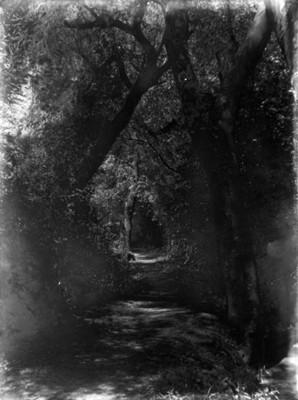Camino entre el bosque, paisaje