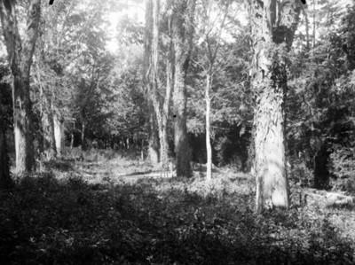 Vereda en un bosque, vista parcial