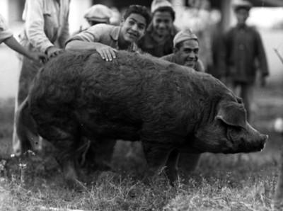 Internos de La Castañeda junto a cerdo, retrato