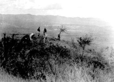 Sistema 7 venado. Montículo Sur Tomada antes de la exploración
