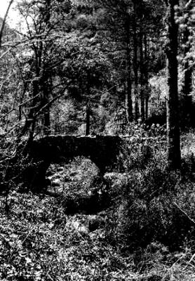 Bosque del Desierto de los Leones, vista parcial