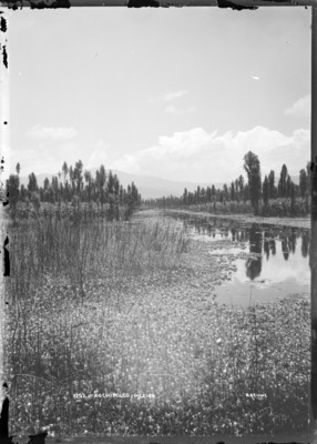 Canal de Nativitas en Xochimilco, vista parcial